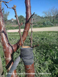 jardin comestible
