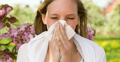 Hay fever is an allergy to pollen grains of grasses Hay Fever Symptoms And Treatment