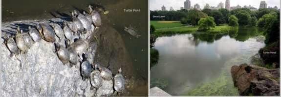 Teenage Mutant Ninja Turtles home at Central Park