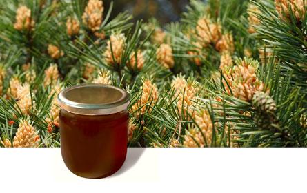 Πωλείται μέλι πεύκου στην Τρίπολη