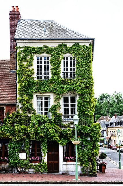 vines growing on building's facade adds wow factor