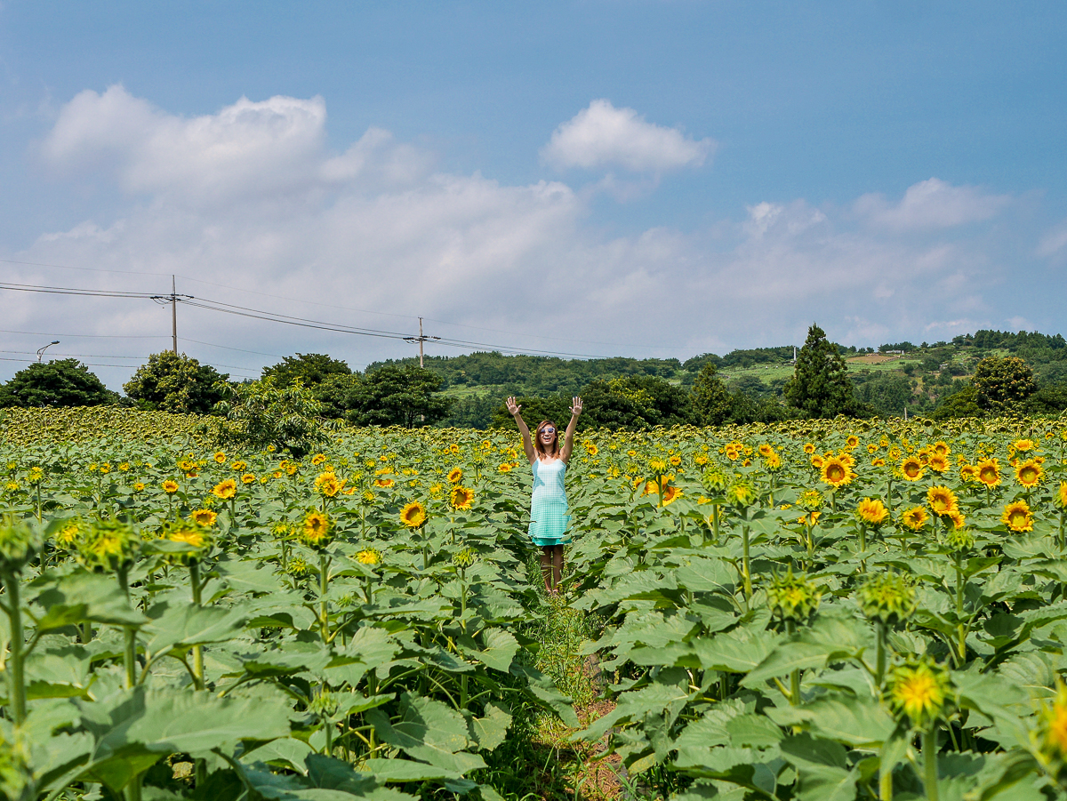 sunflower field jeju korea visiting sunflowers ootd outfit jeju korea