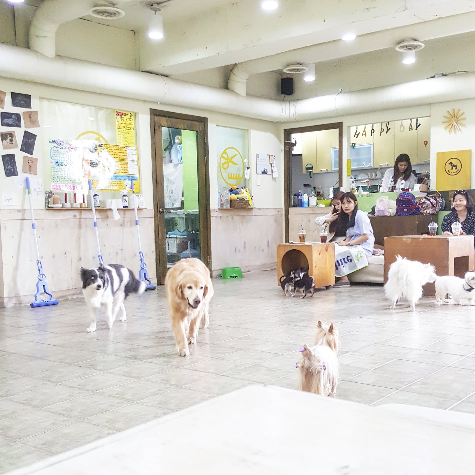 rescue dog cafe hongdae sunnyne dog cafe