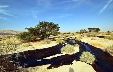Israël connaît son plus grand désastre écologique