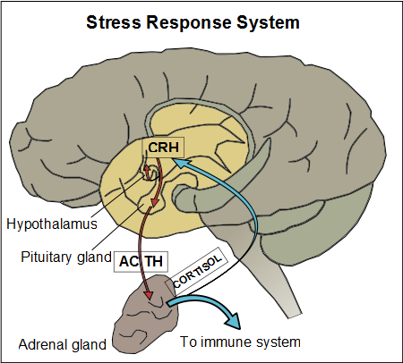 what is the relationship between stress and physical illness