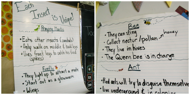 Insect Anchor Charts