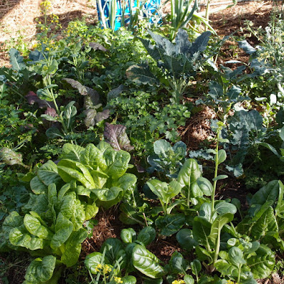 eight acres: organic gardening - don't just replace chemicals with organic inputs, let nature do the work!