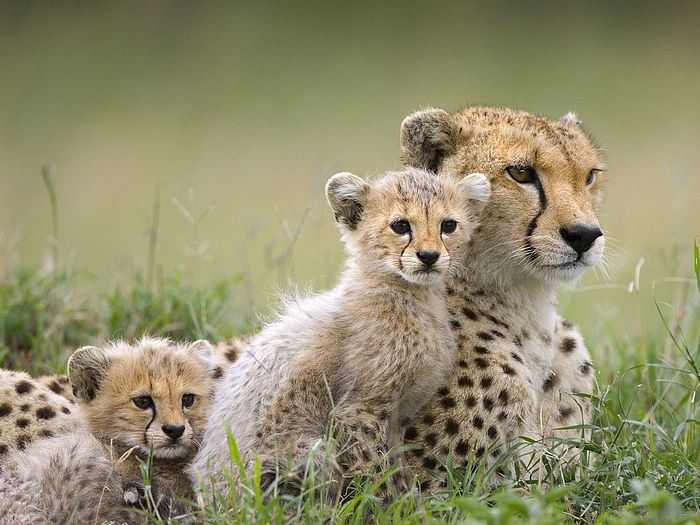 All Animals Wallpaper: Animals Plannet: Hd Animal Wallpapers