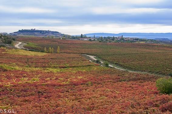 Paisaje del otoño del vino