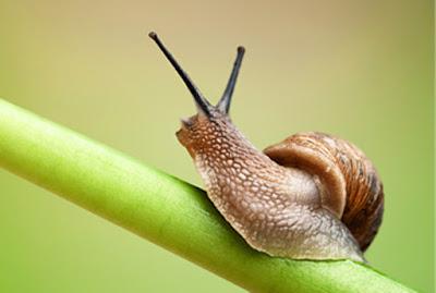 http://www.cute-calendar.com/event/national-escargot-day/14452.html