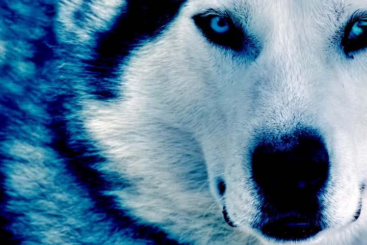 kurt ve kış resimleri