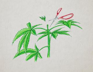 poda FIM marihuana