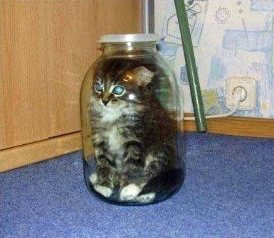 Lustige kleine Katze eingeschlossen in Glas