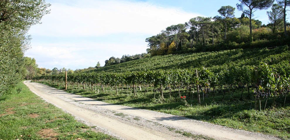 vineyards of Villa Le Piazzole