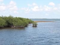 Islas y manglares