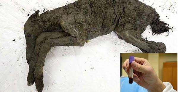 Πήραν υγρό αίμα από ένα εξαφανισμένο άλογο 42.000 χρόνων για κλωνοποίηση