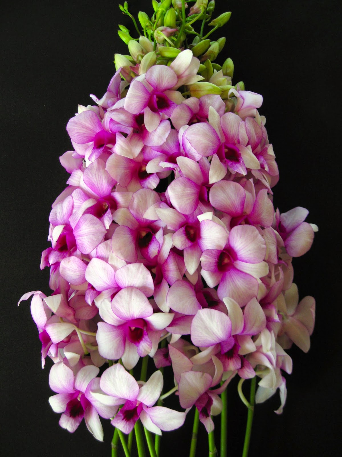 Mother S Day Orchid Flowers Orchidaceous Orchid Blog