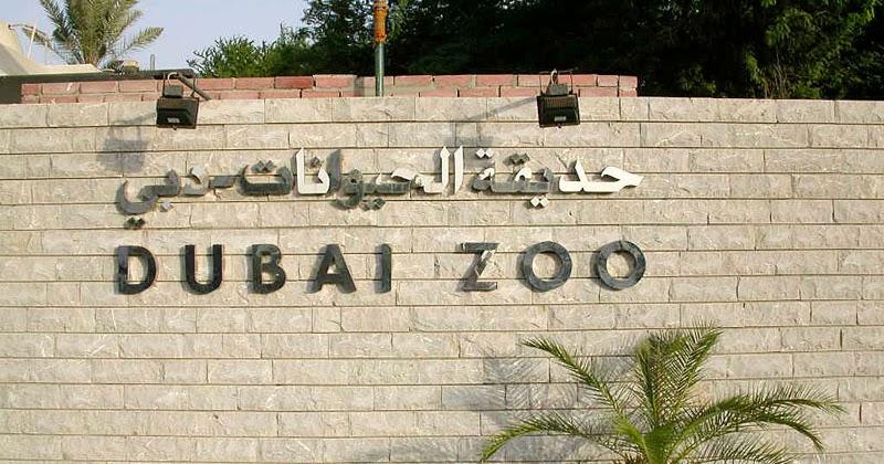 Zoo News Digest Save Dubai Zoo