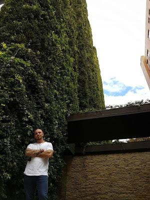 Căn hộ 11 tầng được 'bảo hộ' bởi cây xanh 2