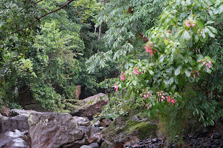 Flowers blooming over Rio Viejo