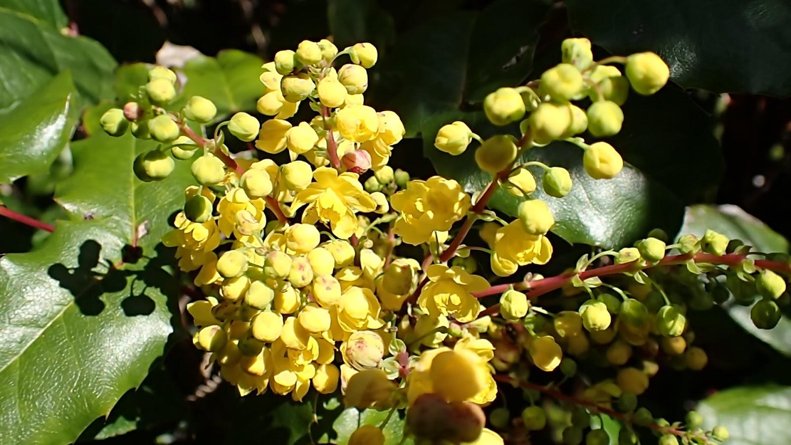 Kathi 39 s garden art rust n stuff for Oregon craft floral