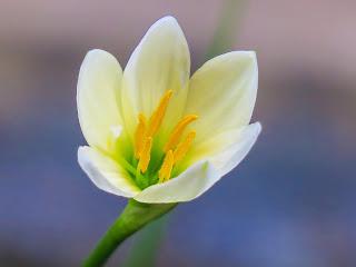 Bagian-Bagian Bunga yang Merupakan Simbol Cinta