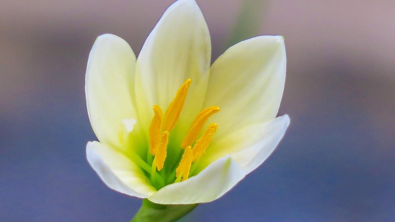 Bagian Bagian Bunga Yang Merupakan Simbol Cinta