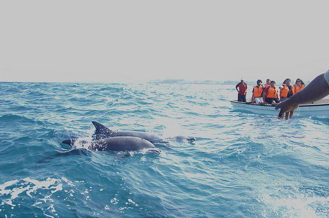 Dolphin Sighting in Zanzibar, Tanzania