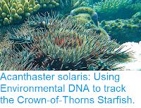 https://sciencythoughts.blogspot.com/2019/01/acanthaster-solaris-using-environmental.html