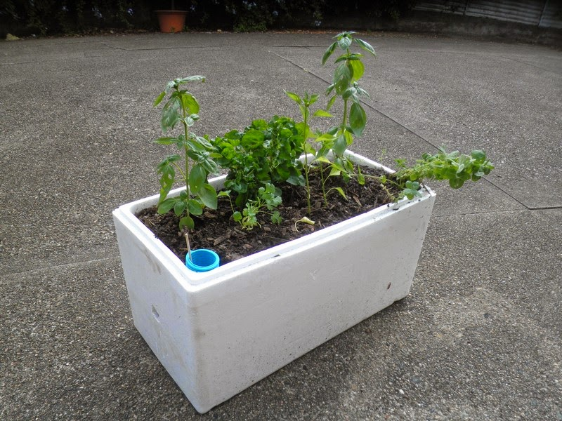 Vegetable Garden Polystyrene Box