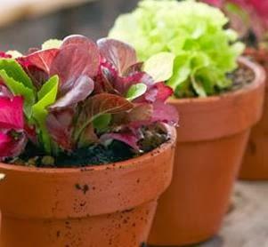 cuidados plantas maceta otoño