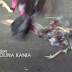 Cockfights in Reunion Island - Premiera!