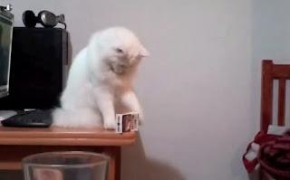 Kucing Selalu Menjatuhkan Barang