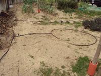 zona cultivo huerto escolar