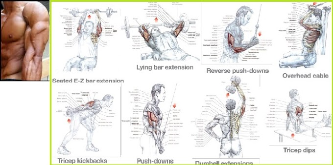seven Exercises to Quickly Get the Triceps of a Fitness Model