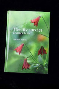 The lily species