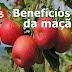13 benefícios surpreendentes da maçã