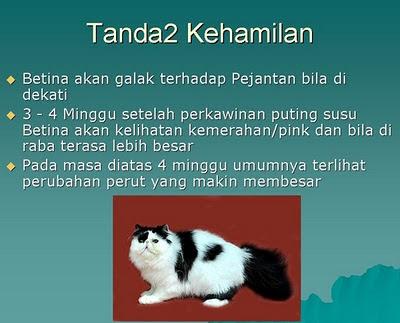 tanda tanda kucing hamil