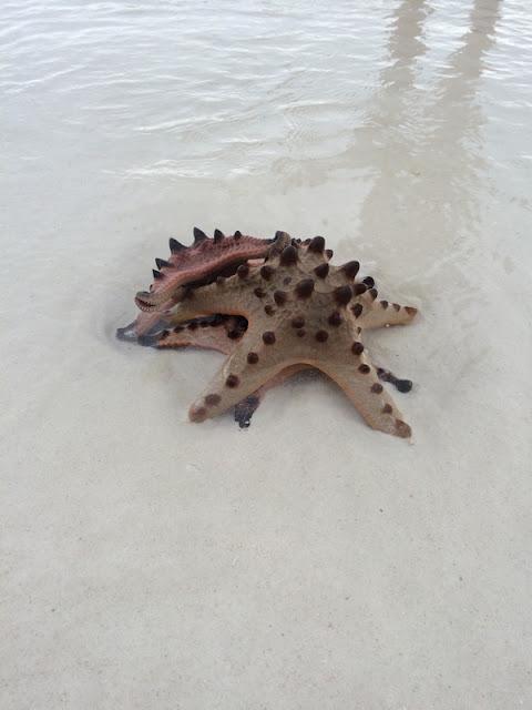 BOHOL : Etoiles de mer à Alona Beach / Philippines : 3 jours à BOHOL / www.by-laura.fr
