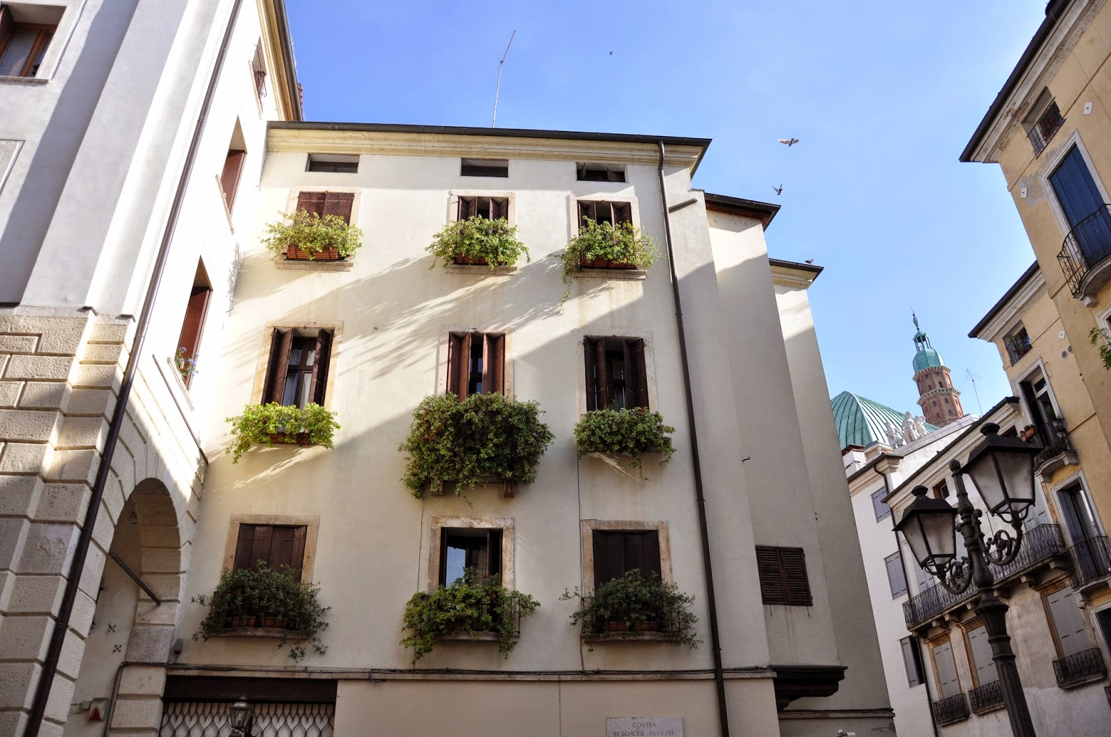 Windowsills overhang with green plants  in Vicenza, Italy