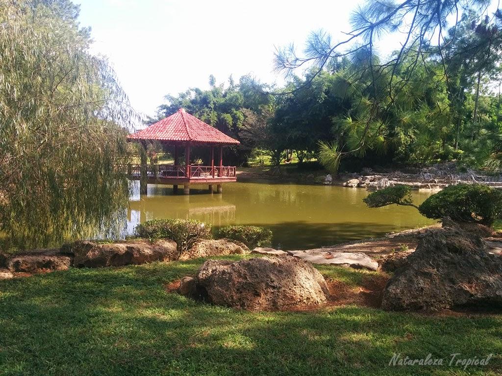 Lago presente en el Jardín Japonés, Jardín Botánico Nacional de Cuba