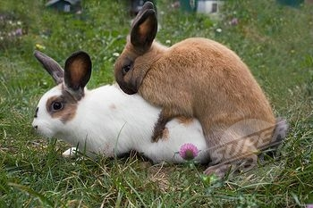 Excellent mamals who have sex for fun curious question