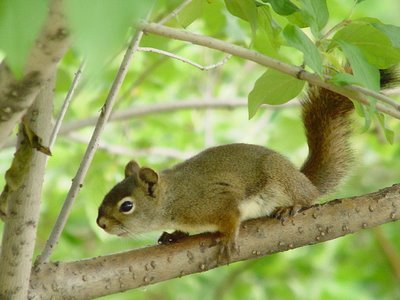 Squirrel | The Life of Animals