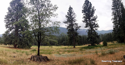 Meadow with Ponderosa stump and oak