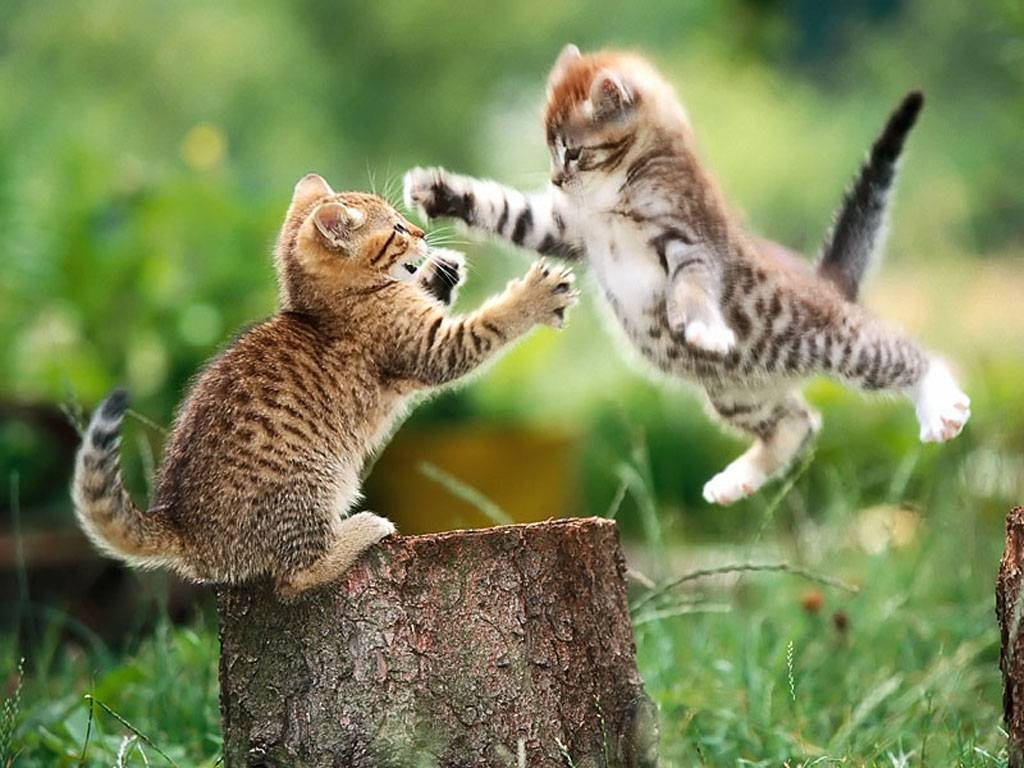 wallpaper cute funny animals -#main