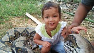 Foto Anak Kecil Duduk Diatas Ular Besar Ini Ternyata Di Daerah Kumpeh Ilir