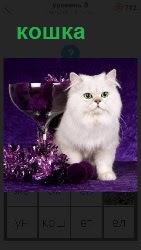 белая пушистая кошка на столе