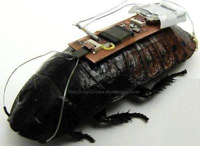 Kecoa-Cyborg Bio-Robotik-Pertama