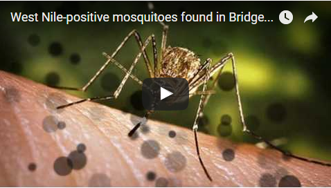 West Nile-positive mosquitoes found in Bridgeport