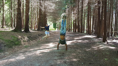 Un pino entre los pinos (a handstand amongst the pine trees)